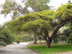 Los Angeles County Arboretum and Botanic Garden - Near the Australian collection