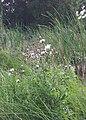 Lake Keller - Maplewood, MN - panoramio (2).jpg