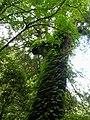 Lalashan Forest Reserve 拉拉山森林保育區 - panoramio (2).jpg