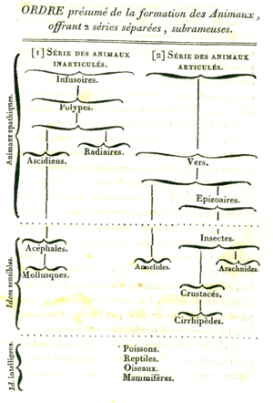 Evolutionary taxonomy - Image: Lamarck 1815 diagram of animal evolution