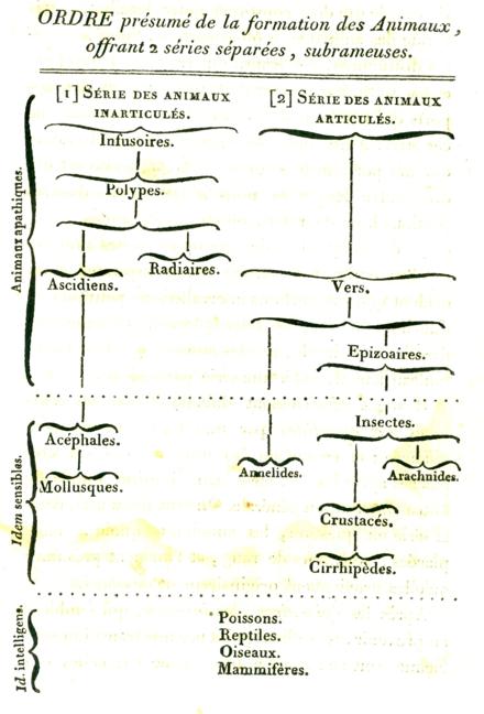 Evolutionary Taxonomy Wikiwand