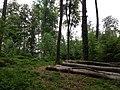 Landschaftsschutzgebiet Strothheide Melle Datei 16.jpg