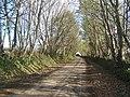 Lane through trees towards Llawhaden - geograph.org.uk - 1019918.jpg