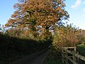 Lane to Butterleigh - geograph.org.uk - 1583094.jpg