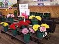 Lark Street Flower Market (37215690754).jpg