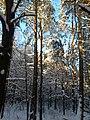Las mieszany z przewagą sosny - panoramio.jpg