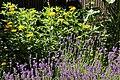 Lavendelbeet im Innenhof 10.jpg