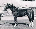Le Moss at Henry Cecil's in 1980.jpg