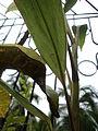Leaf by komal bandekar.JPG