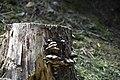 Lenno - Penisola di Lavedo 0630.JPG