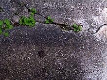 Life in a crack.jpg