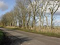 Line of trees beside the road - geograph.org.uk - 1613974.jpg