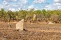 Litchfield National Park (AU), Magnetic Termite Mounds -- 2019 -- 3727.jpg