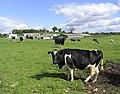 Livestock field - geograph.org.uk - 435101.jpg