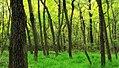 Local Hike (9) (9695305599).jpg