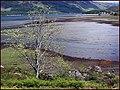 Loch Duich. - panoramio (1).jpg