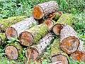 Logging evidence - geograph.org.uk - 1441652.jpg