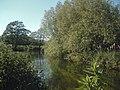 Looking onto the River Idle - panoramio.jpg