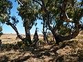 Louw Wepener Monument - panoramio.jpg