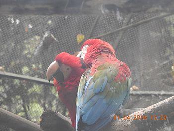 Lovely Macaws.jpg