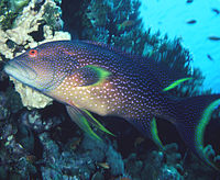 List of marine fishes of Mauritius - Wikipedia