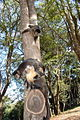Macaco em Tibaji 190708 REFON 4.JPG