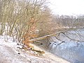 Machnower See - Noerdl. Ufer (Machnow Lake - North Bank) - geo.hlipp.de - 32113.jpg