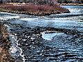 Madison River near Ennis January 2015 19.JPG