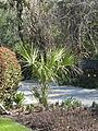 Magnolia Plantation and Gardens - Charleston, South Carolina (8555522031).jpg