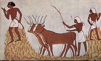 Farmers with wheat and cattle - Ancient Egyptian art 3,400 years ago Maler der Grabkammer des Menna 012.jpg