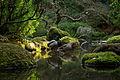 Mallard Ducks, Japanese Gardens, Portland, Oregon.JPG