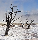 Yellowstone Milli Parkı, ABD