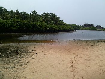 Mangroove ecosystem 02.jpg
