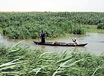 Marshes in Iraq.