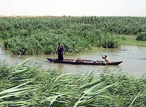Tigris–Euphrates river system - Marsh Arabs poling a mashoof in the marshes of southern Iraq