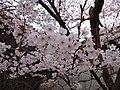Marunouchi, Matsuyama, Ehime Prefecture 790-0008, Japan - panoramio (49).jpg