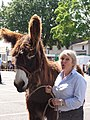 Melle (Deux-Sèvres) Concours baudets du Poitou 2012, 14 juin (6).JPG