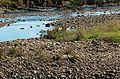 Mersey-River-Latrobe-20070326-008.jpg