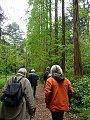 Metasequoia2.JPG