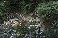 Minnamurra Rainforest - panoramio (17).jpg