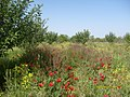 Miyaneh, East Azerbaijan Province, Iran - panoramio (4).jpg