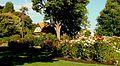 Mona Vale rosegarden, 2009.jpg