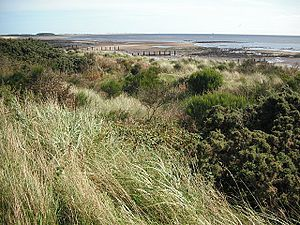 Monifieth - Monifieth Links, looking towards Barry Buddon