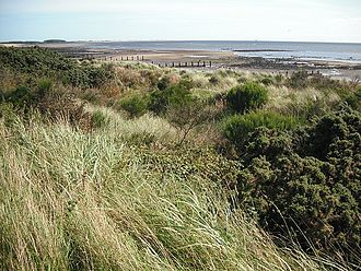 Monifieth - Monifieth Links, looking towards Barry Buddon