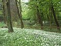 Monza-Parco-laghetto-valle-dei-sospiri-01.jpg