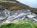Mosaic mackerel at Lochmaddy - geograph.org.uk - 1483360.jpg