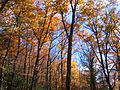 Mount Mitchell Fall Foliage.JPG