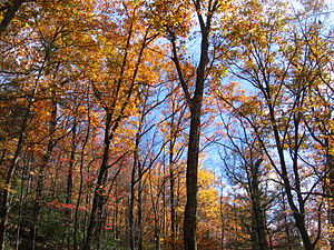 Mount Mitchell - Mount Mitchell Fall Foliage.