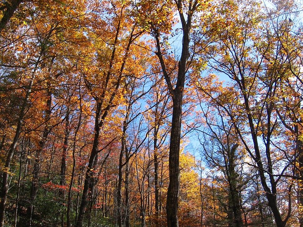 Mount Mitchell Fall Foliage