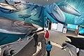 Museum der Walforschungsstation Mingan Island Cetacean Study.jpg